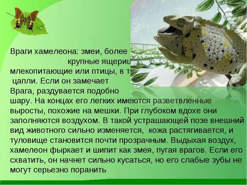 марку термобелья хамелеон животное как он маскируется где обитает хорошим термобельем после