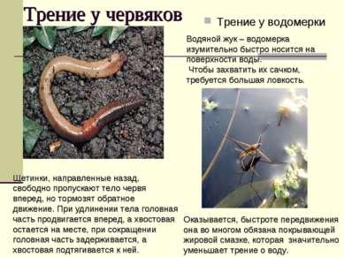 Трение у червяков Трение у водомерки Щетинки, направленные назад, свободно пр...
