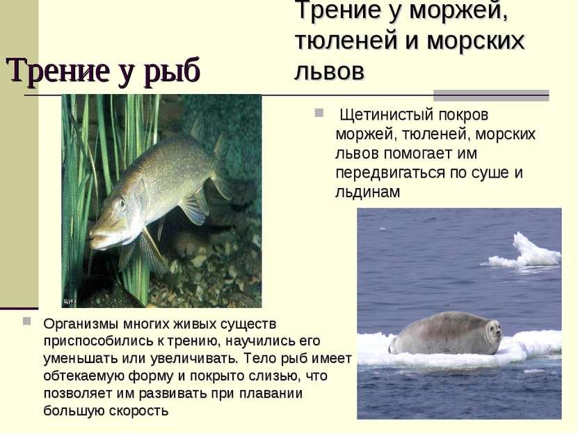 Трение у рыб Организмы многих живых существ приспособились к трению, научилис...