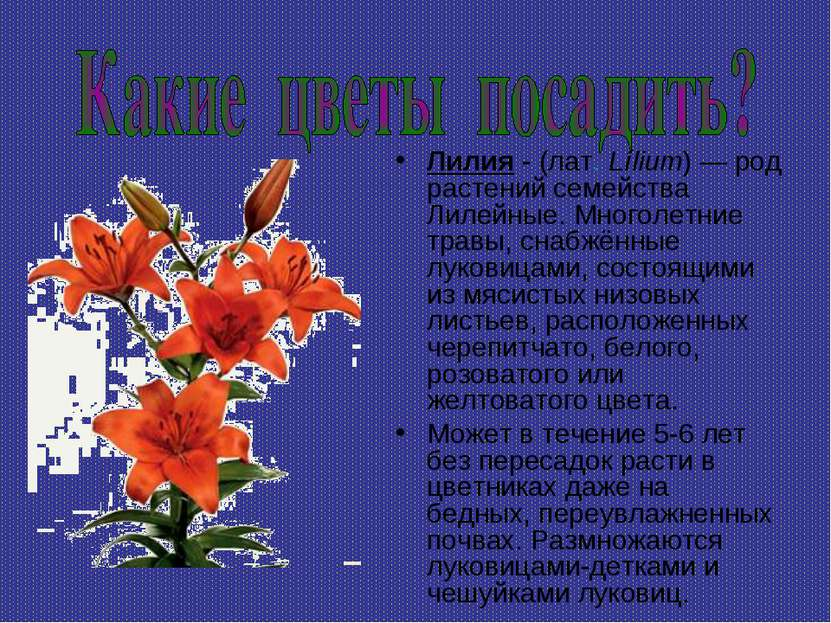 Лилия - (лат.Lílium)— род растений семейства Лилейные. Многолетние травы, с...