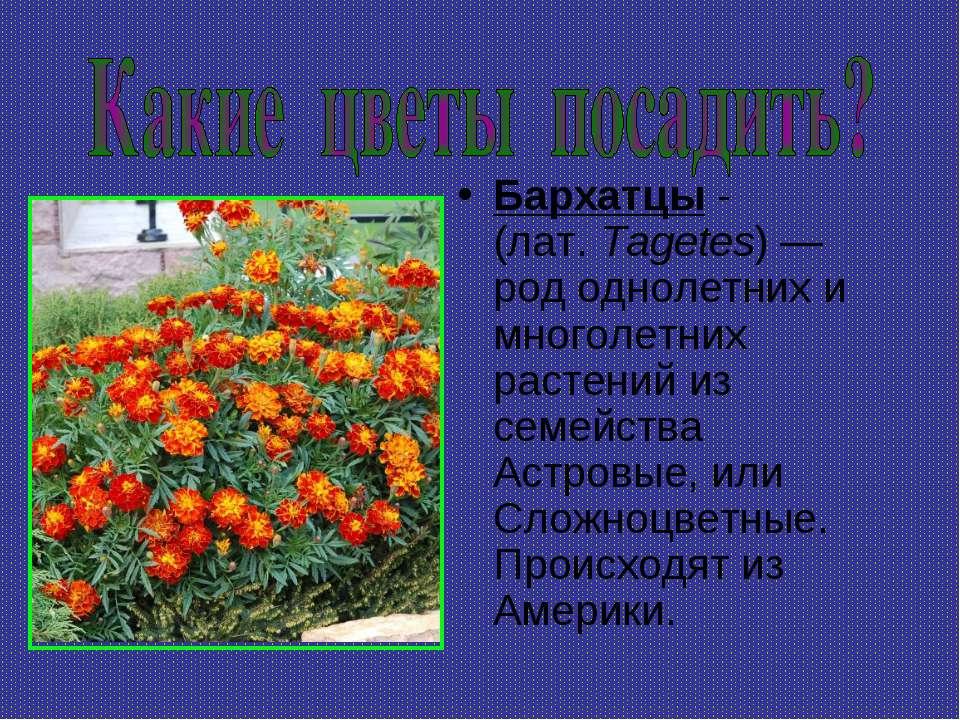 Бархатцы - (лат.Tagetes)— род однолетних и многолетних растений из семейств...