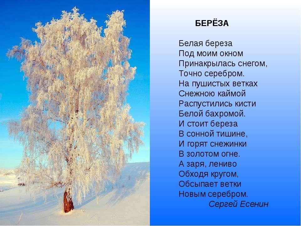 БЕРЁЗА Белая береза Под моим окном Принакрылась снегом, Точно серебром. На пу...