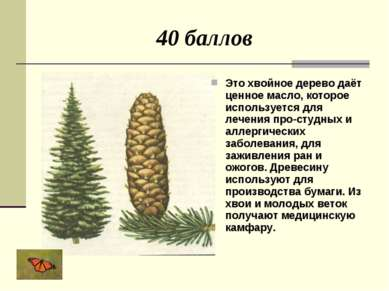 40 баллов Это хвойное дерево даёт ценное масло, которое используется для лече...