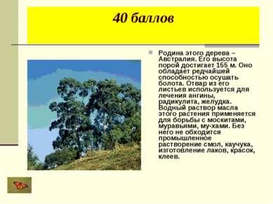 40 баллов Родина этого дерева – Австралия. Его высота порой достигает 155 м. ...