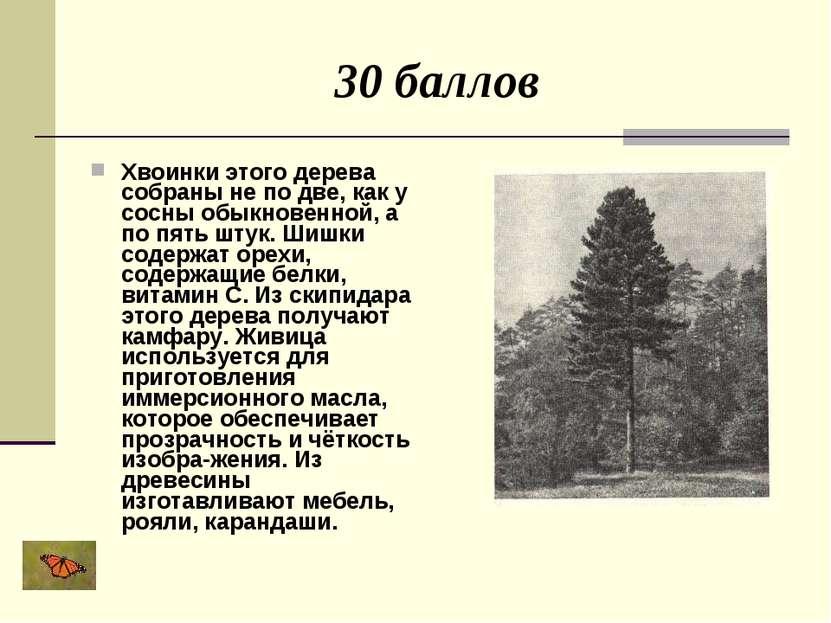 30 баллов Хвоинки этого дерева собраны не по две, как у сосны обыкновенной, а...