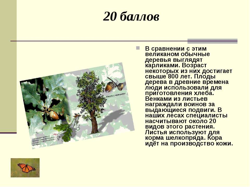 20 баллов В сравнении с этим великаном обычные деревья выглядят карликами. Во...