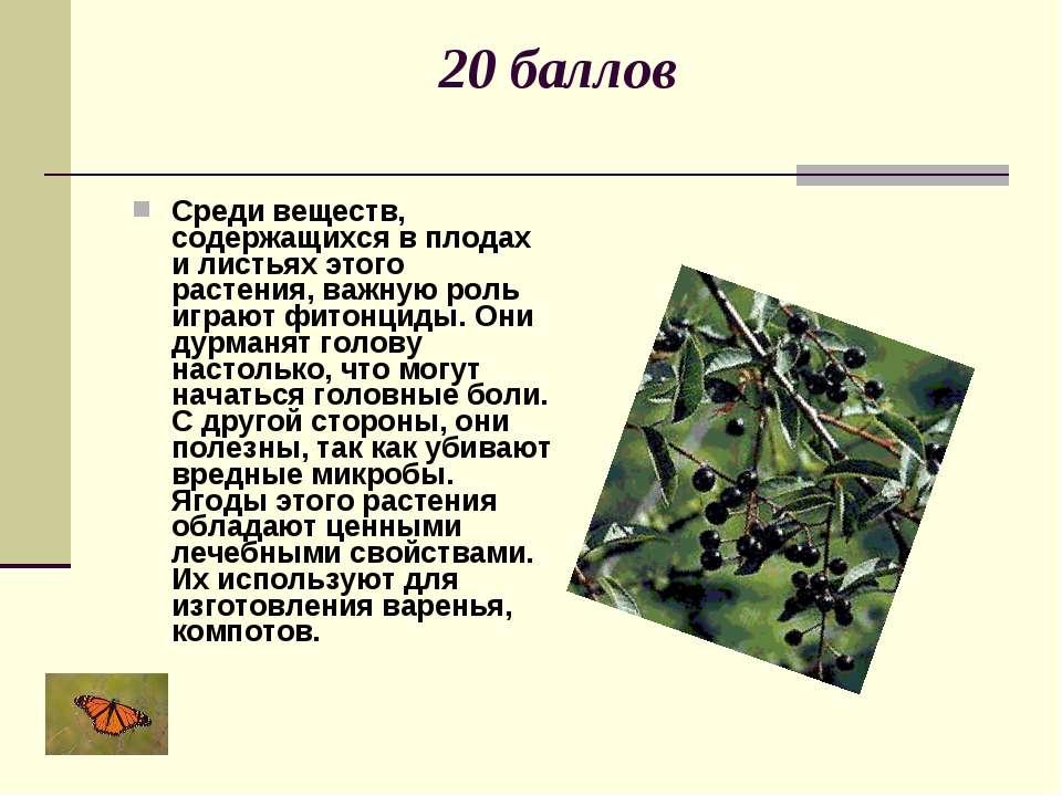 20 баллов Среди веществ, содержащихся в плодах и листьях этого растения, важн...
