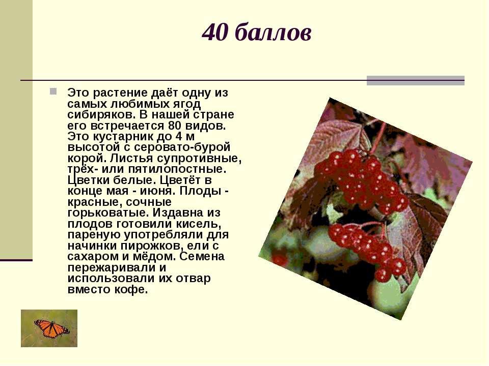 40 баллов Это растение даёт одну из самых любимых ягод сибиряков. В нашей стр...