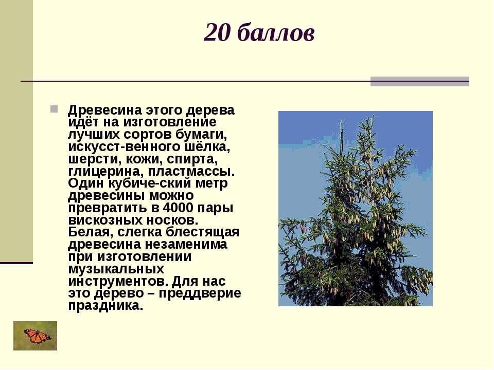 20 баллов Древесина этого дерева идёт на изготовление лучших сортов бумаги, и...