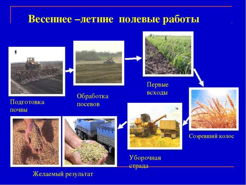 Обработка посевов Подготовка почвы Первые всходы Созревший колос Уборочная ст...