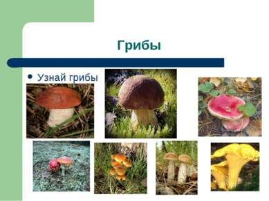 Грибы Узнай грибы