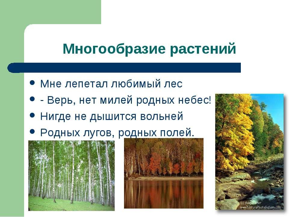 Многообразие растений Мне лепетал любимый лес - Верь, нет милей родных небес!...