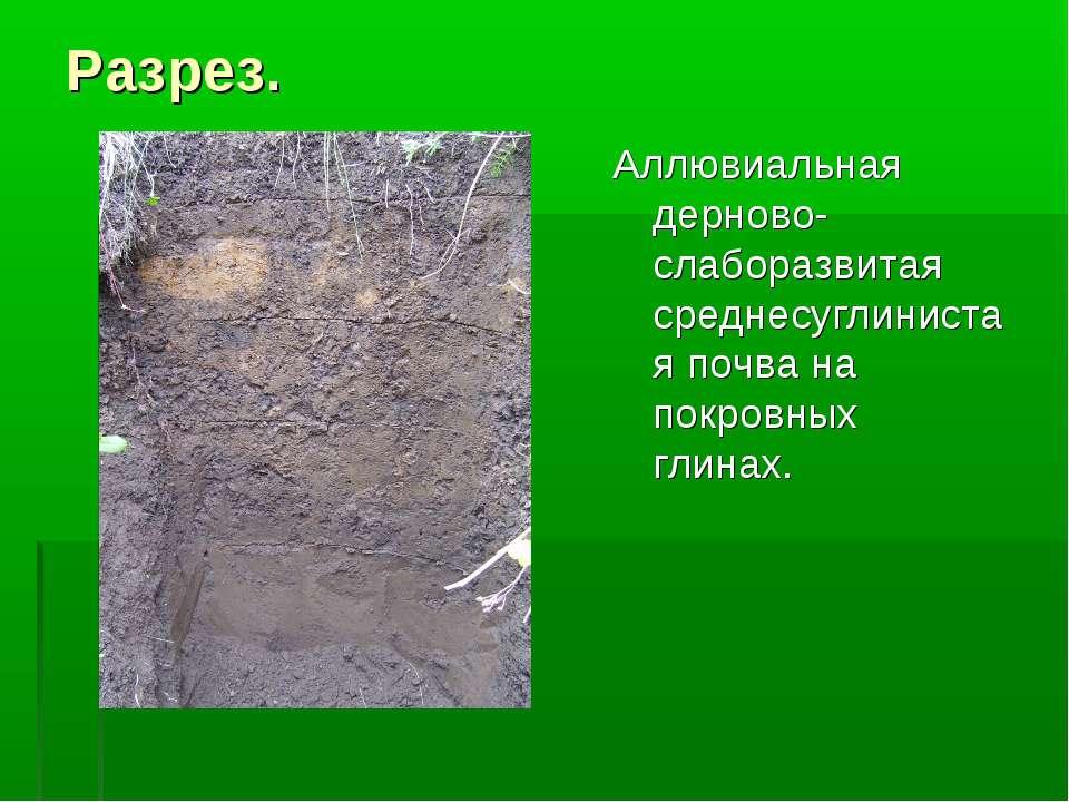 Разрез. Аллювиальная дерново-слаборазвитая среднесуглинистая почва на покровн...