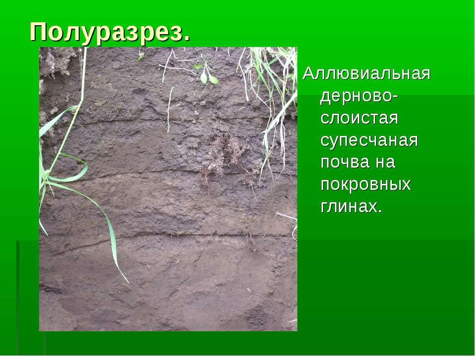 Полуразрез. Аллювиальная дерново-слоистая супесчаная почва на покровных глинах.