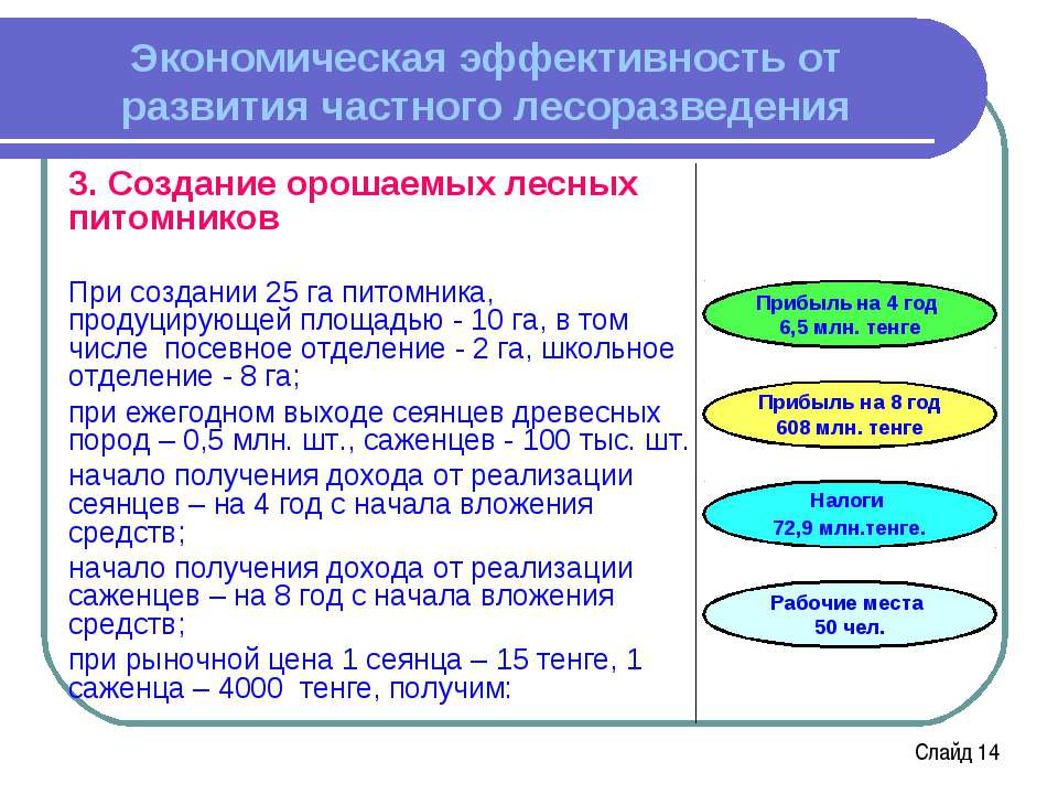 Экономическая эффективность от развития частного лесоразведения 3. Создание о...