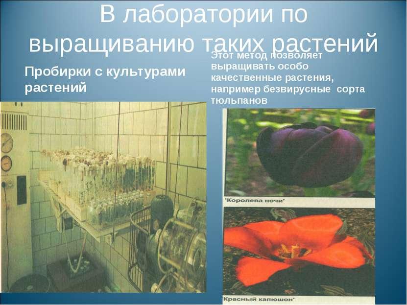 В лаборатории по выращиванию таких растений Пробирки с культурами растений Эт...