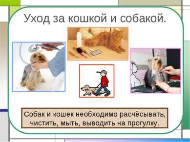 Уход за кошкой и собакой. Собак и кошек необходимо расчёсывать, чистить, мыть...