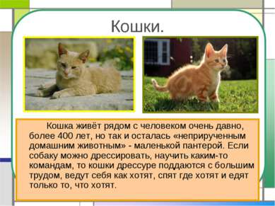 Кошки. Кошка живёт рядом с человеком очень давно, более 400 лет, но так и ост...