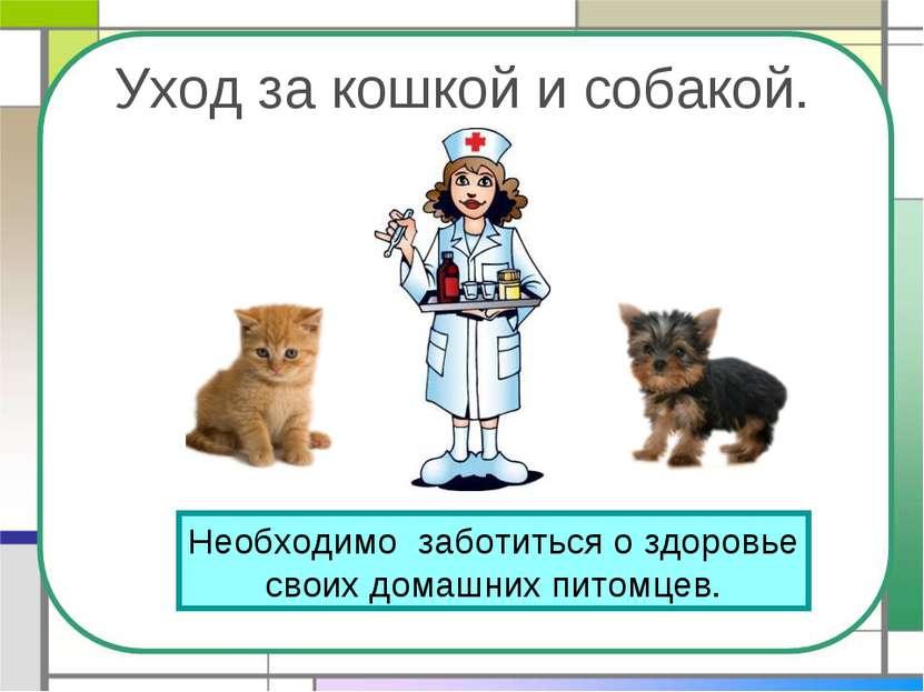 Уход за кошкой и собакой. Необходимо заботиться о здоровье своих домашних пит...