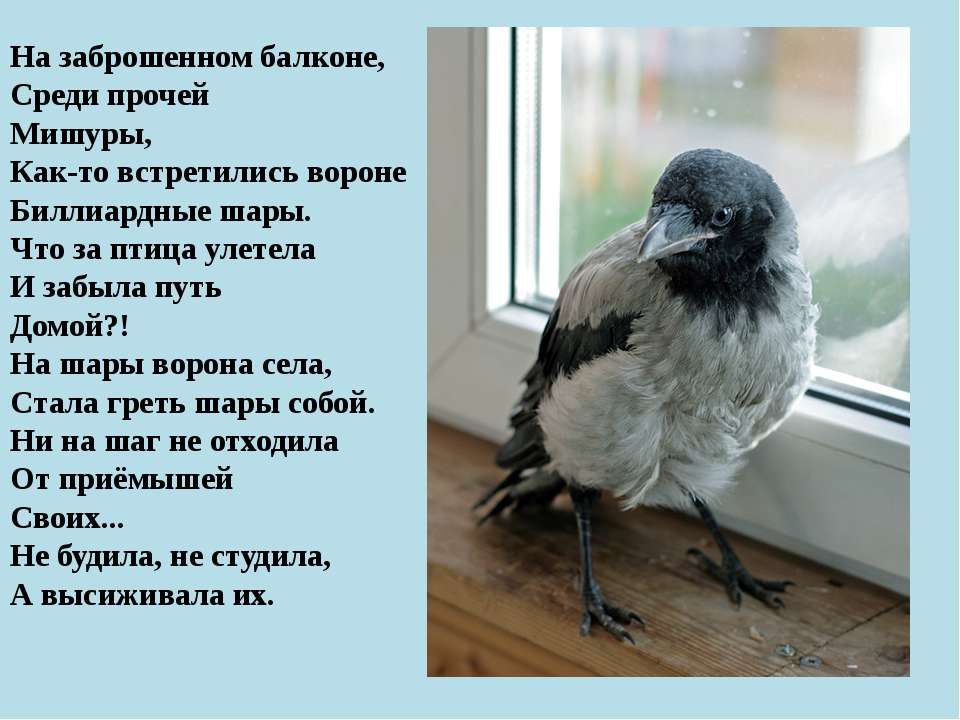 На заброшенном балконе, Среди прочей Мишуры, Как-то встретились вороне Биллиа...