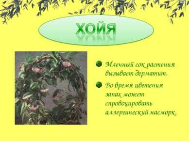 Млечный сок растения вызывает дерматит. Во время цветения запах может спровоц...