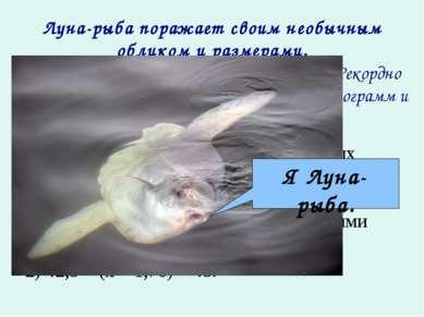 Луна-рыба поражает своим необычным обликом и размерами. Это самая тяжёлая кос...