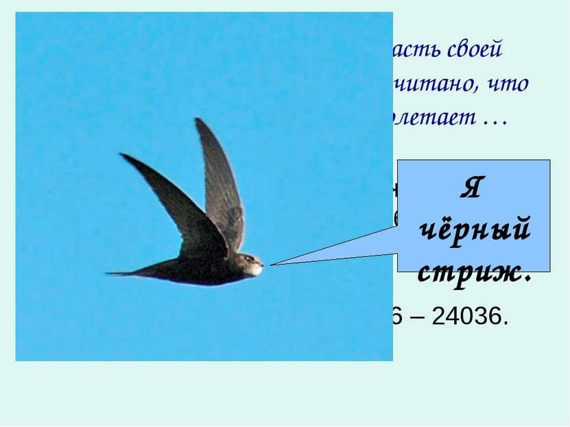 Черный стриж большую часть своей жизни проводит в полете. Подсчитано, что чёр...