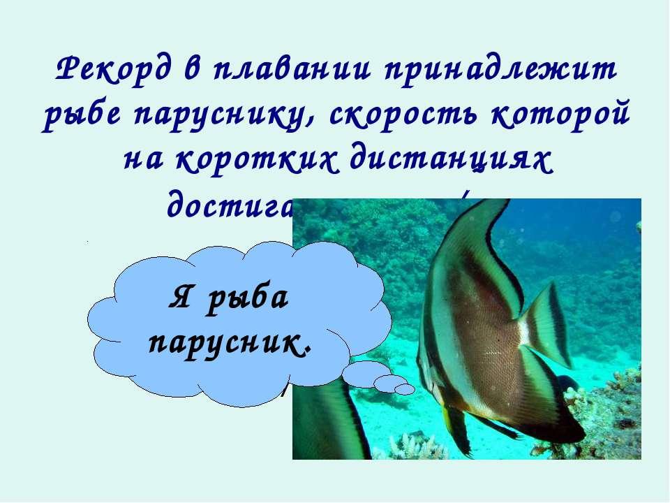 Рекорд в плавании принадлежит рыбе паруснику, скорость которой на коротких ди...