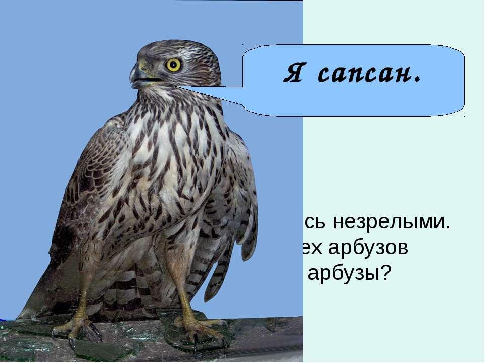 Самое острое зрение у сапсана. Он видит голубя на расстоянии … км. Из 200 арб...