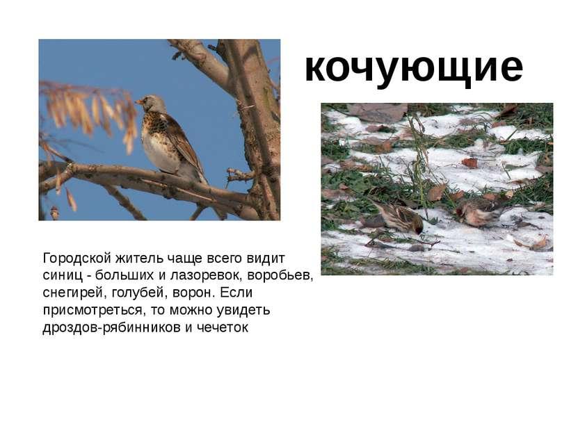 Городской житель чаще всего видит синиц - больших илазоревок, воробьев, снег...