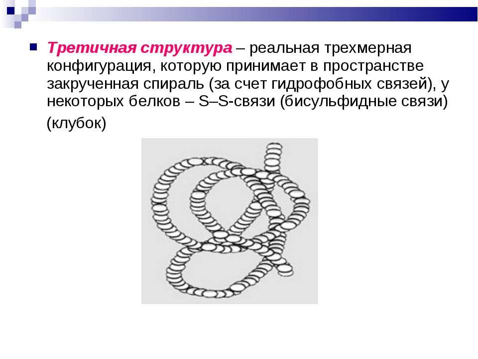 Третичная структура – реальная трехмерная конфигурация, которую принимает в п...