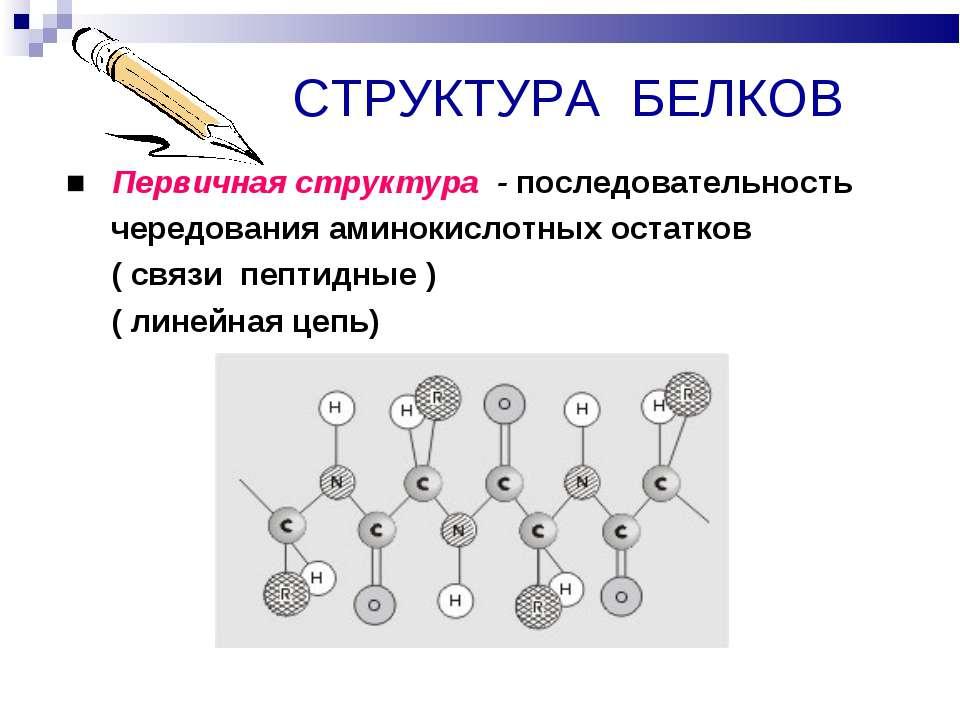 СТРУКТУРА БЕЛКОВ ■ Первичная структура - последовательность чередования амино...