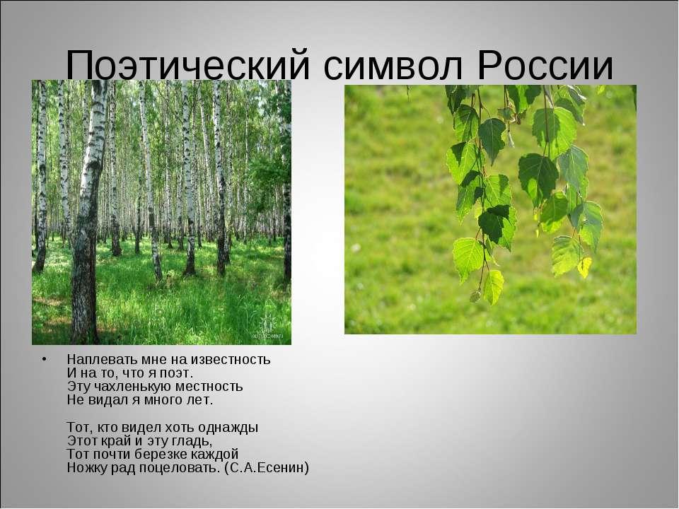 Поэтический символ России Наплевать мне на известность И на то, что я поэт. Э...
