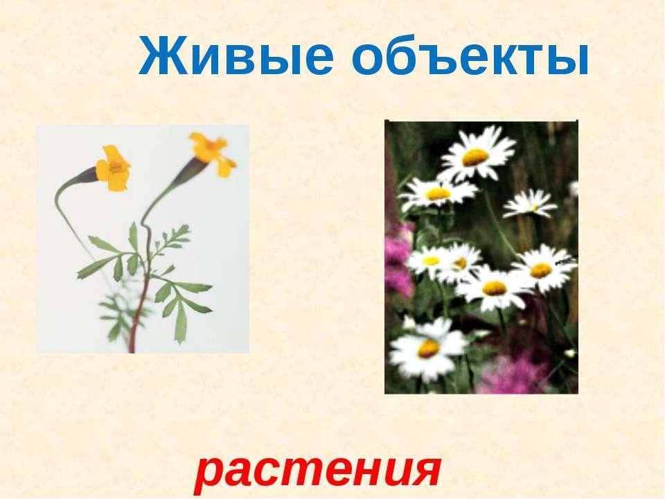 Живые объекты растения