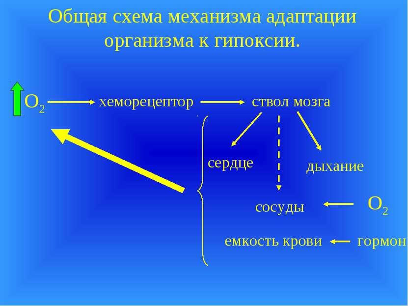 Общая схема механизма адаптации организма к гипоксии. хеморецептор ствол мозг...