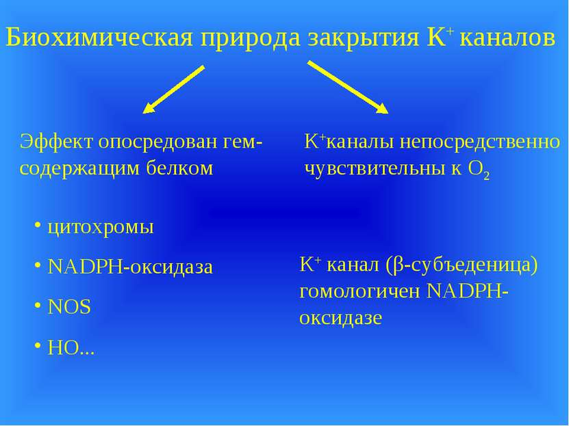 Биохимическая природа закрытия К+ каналов К+каналы непосредственно чувствител...