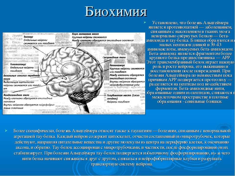 Биохимия Установлено, что болезнь Альцгеймера является протеинопатией— забол...