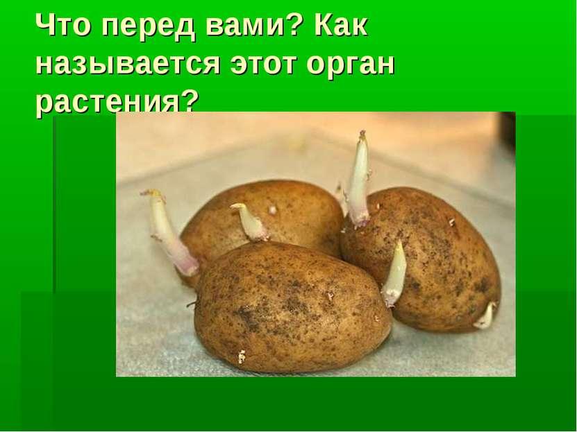 Что перед вами? Как называется этот орган растения?
