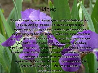 Ирис Корневища ириса японского накладывают на раны, отвар растения используют...