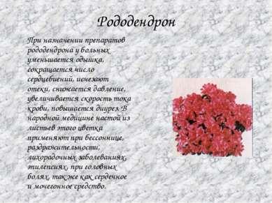 Рододендрон При назначении препаратов рододендрона у больных уменьшается одыш...