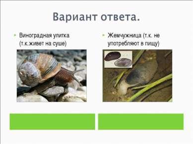Виноградная улитка (т.к.живет на суше) Жемчужница (т.к. не употребляют в пищу)