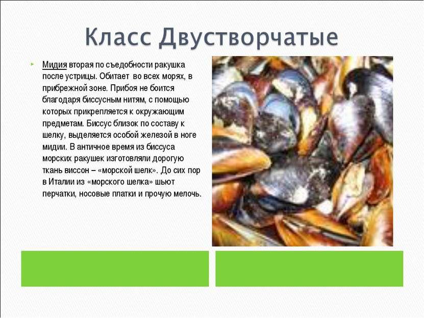 Мидия вторая по съедобности ракушка после устрицы. Обитает во всех морях, в п...