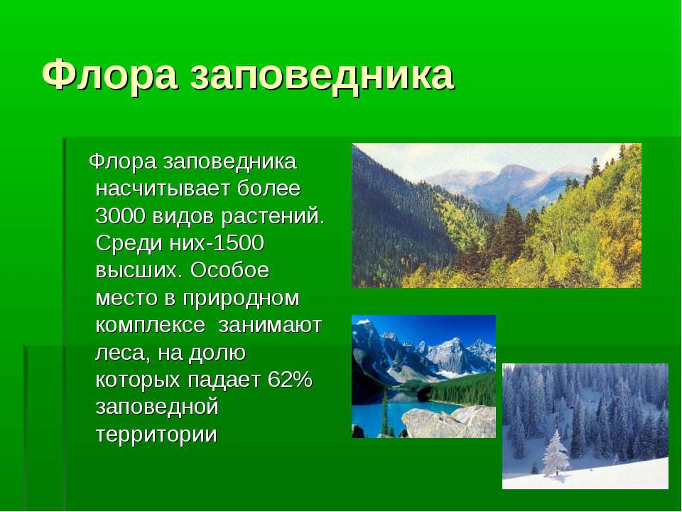 Флора заповедника Флора заповедника насчитывает более 3000 видов растений. Ср...