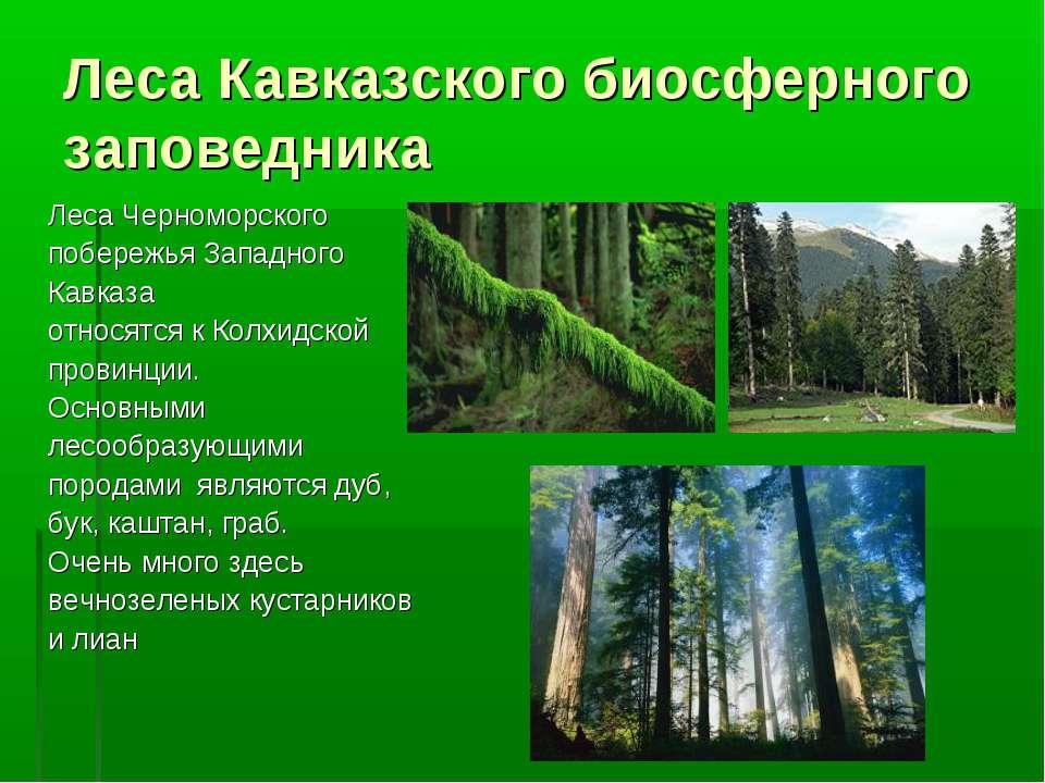Леса Кавказского биосферного заповедника Леса Черноморского побережья Западно...
