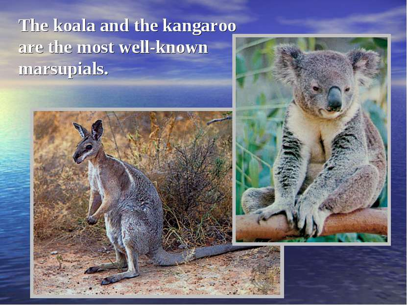 The koala and the kangaroo are the most well-known marsupials.