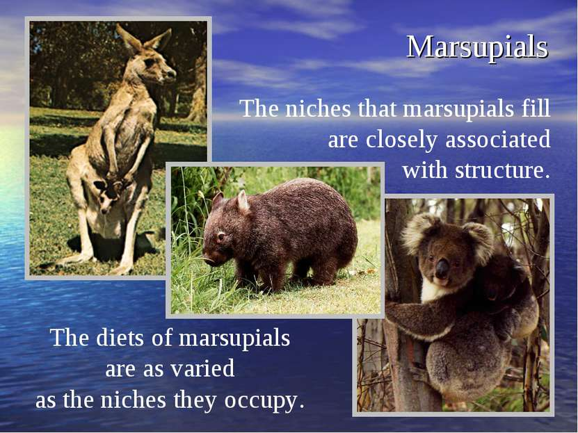 Marsupials The niches that marsupials fill are closely associated with struct...