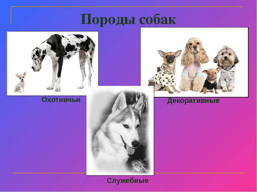 Породы собак Охотничьи Декоративные Служебные