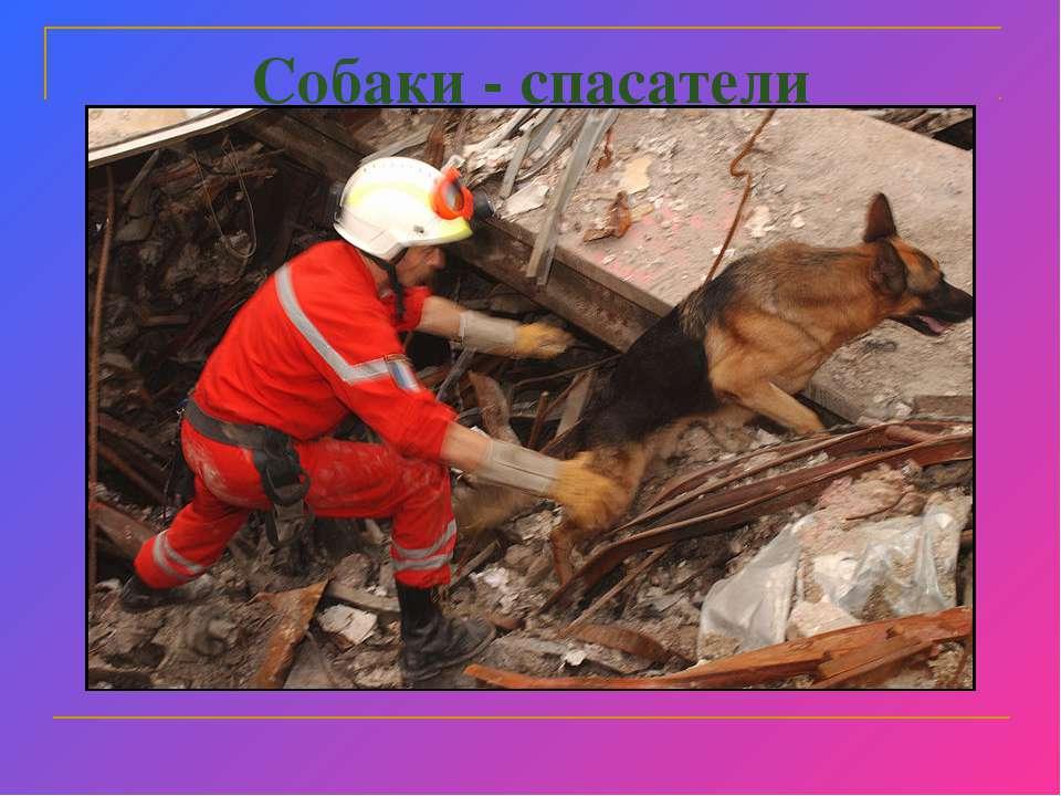 Собаки - спасатели