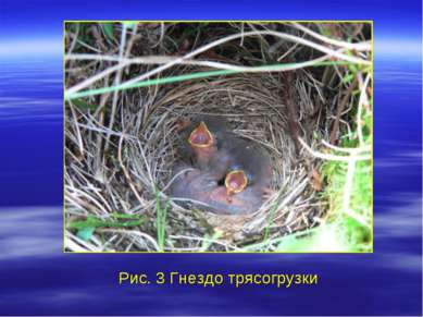 Рис. 3 Гнездо трясогрузки