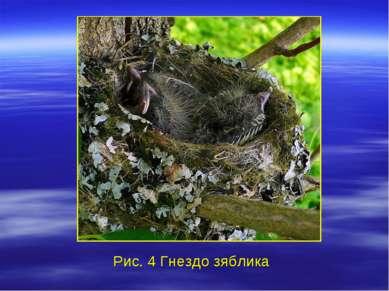 Рис. 4 Гнездо зяблика